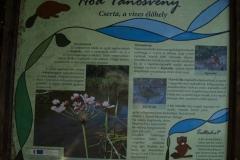 Cserta, a vizes élőhely