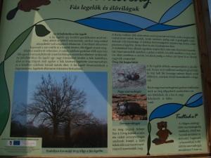 Fás legelők és élőviláguk